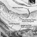 Wissenschaftler haben einen Tiefseewurm gefunden, der die Erde 270 Millionen Jahre vor den Dinosauriern bewohnte