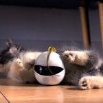 Kickstarter získává peníze na inteligentního kočičího robota Ebo