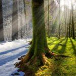Tutkijat kutsuivat säätä koko Venäjällä epänormaaliksi