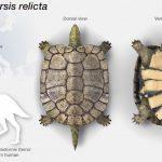 Wissenschaftler haben die Überreste einer alten Schildkröte gefunden, die ein massives Aussterben überlebt hat