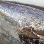 Za 40 let počet hlíst přenášených na ryby z lidí vzrostl 283krát
