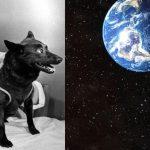 Як собака злітала в космос для перевірки надійності корабля Юрія Гагаріна