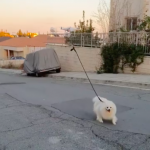 На відео показали, як дрон «вигулює» собаку