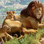 Eläintarhojen virtuaalinen suunnittelija antaa pois 20% alennuksella
