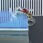 Podívejte se na flexibilního robota velikosti dlaně - dokáže překonat překážky nad jeho výškou