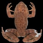 The extinct frog was alive. Environmentalists found her DNA in the environment