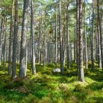 Plants will help people search for the remains of the missing in the forests