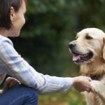 Dogs were able to perceive words of love
