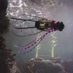 Underwater robot octopus developed