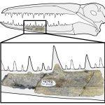 Po vyhynutí nahradili dinosaury obří ptáci s rozpětím křídel 6,4 metru