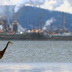 Program snižování ozonu šetří 1,5 miliardy ptáků