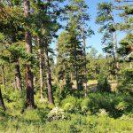 З'ясувалося, яку роль у зміні клімату грають гігантські дерева