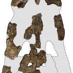 Les restes du «roi des marais» - un énorme crocodile préhistorique identifié