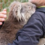 3 billion animals killed and affected by fires in Australia