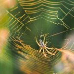 Spiders are able to transmit antibiotic-resistant bacteria