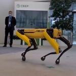 Sber has a robot dog