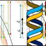 Publikován kompletní průvodce DNA Origami pro začátečníky