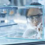 Female mice become indifferent to their offspring due to intestinal bacteria