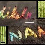 Les chercheurs ont appris à imprimer des hologrammes comestibles