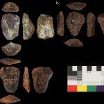 Neaderthals and Homo Sapiens used the same tools
