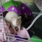 Lab rats turned out to be similar in behavior to fans of social networks