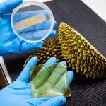 Scientists have developed an antibacterial gel dressing made from durian husks