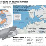 Des chants de baleines ont raconté que les animaux ont évité la migration vers le sud en raison du changement climatique