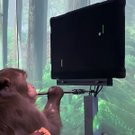 The future is here: the monkey played Pong with the power of thought