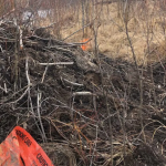 In Canada, Internet access was lost due to beavers gnawing a fiber optic cable