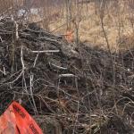 Au Canada, l'accès Internet a été perdu en raison de castors rongeant un câble en fibre optique