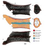 اكتشف العلماء سبب عدم كسر التيروصورات في رقبة عملاقة