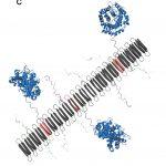 Self-assembling nanofibers protect damage from inflammation