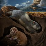 Scientists have discovered two new species of ancient ancestors of burrowing mammals