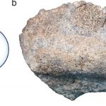 The oldest remains of erectus found in Kenya