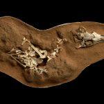 ديناصور صغير يشبه البومة يصطاد مثل الطيور الحديثة