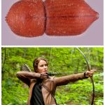 Entomologists named 30 species of beetles after science fiction heroines