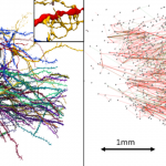 Google and Harvard engineers create a 3D map of a part of the brain with unprecedented detail