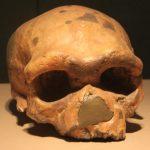 Homo longi: Wie eine neue menschliche Spezies die Entstehungsgeschichte des Homo sapiens veränderte