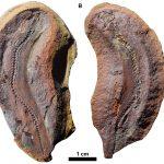تمت استعادة تفاصيل حياة الديناصورات الصغيرة: أطلقوا عليها اسم microsaurs