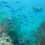 يمكن مشاهدة الحاجز المرجاني العظيم بواسطة إنسان آلي تحت الماء