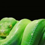 The scaly nature of snakeskin will serve as the basis for flexible batteries