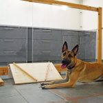 البحث: تميز الكلاب بين الأفعال البشرية المتعمدة والعشوائية