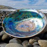 يمكن أن يشكل هيكل أصداف البحر أساس زجاج الأمان للهواتف الذكية